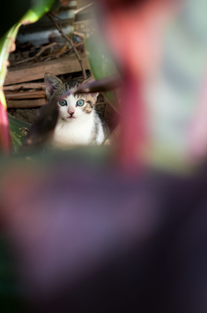 Lurking in the undergrowth by the compost heap